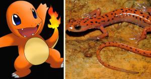 Pokémon: Charmander - Salamandra Roja