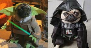 Según estimaciones de IMDb, el Episodio VII de Star Wars llegó a costar 200 millones de dólares. Esta página indica que, hasta el momento,  este sería el filme más costoso de la saga en la historia. (The Purple Pu