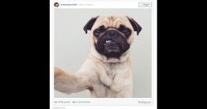 No es el mejor día para este pequeño pug. (Instagram)