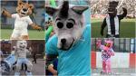Como Fierita: las otras mascotas que dan color y alegría al Fútbol Peruano - Noticias de cienciano alianza lima